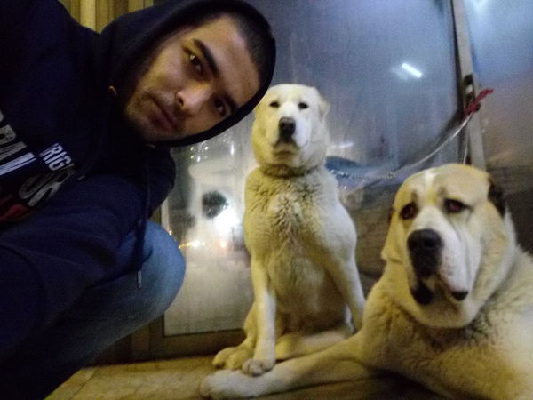 Looking At Camera Portrait Pets Dog Mammal Home Interior Domestic Animals Indoors  Animal Themes One Person Day People Guards Alabai Dogs Dogs Of EyeEm TRUE LOVE ❤ Togetherness Loyalty Happiness Nightlife Illuminated