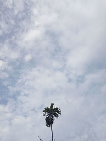 EyeEmNewHere Be. Ready. Low Angle View Cloud - Sky Day Outdoors Sky Tranquility No People Nature Tree EyeEm Ready