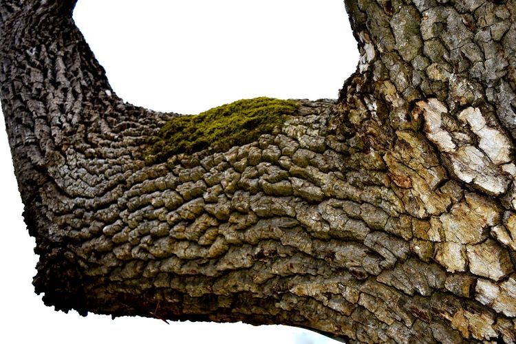 Tree Trees Bark Texture Barks Of A Tree Beauty In Nature Close-up Nature No People Outdoors Textured  Tree Trees And Nature Trees Collection
