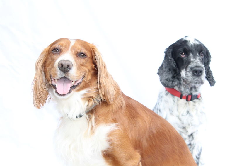 Brother love Hanging Out Enjoying Life Cockerspanielworld Dog Portrait Dog Photography Brother Love