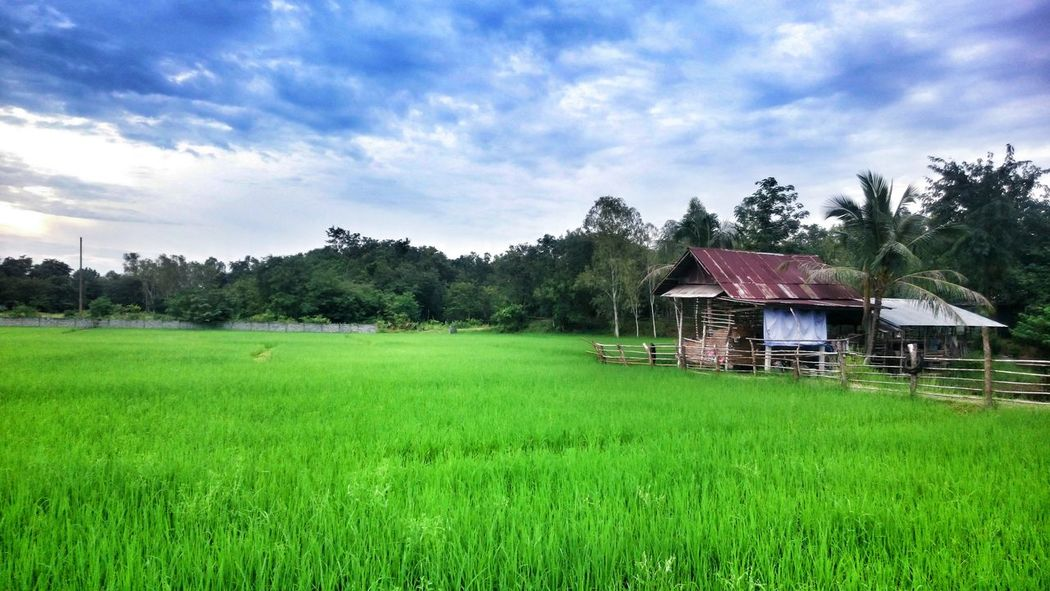 Grass Sky Architecture House Landscape Green Color Nature Beauty In Nature Sony Xperia Z3 Thailand Sony Siam Outdoors Udonthani