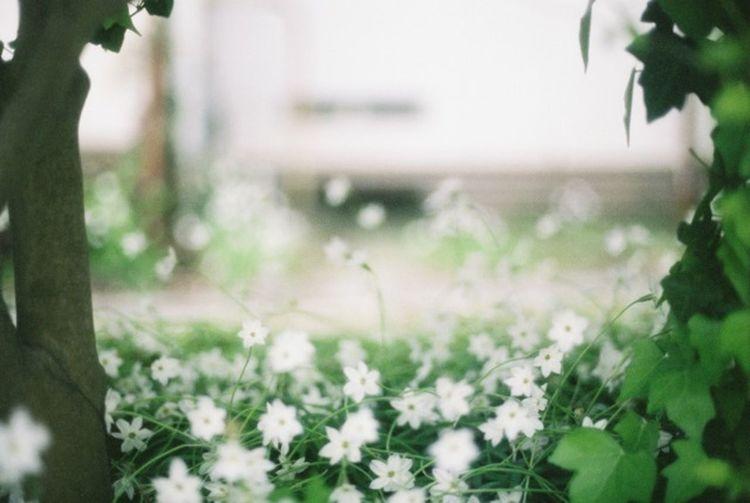 35mm Film Film EyeEm Best Shots EyeEm Nature Lover Sunny Day Flowers Neighborhood