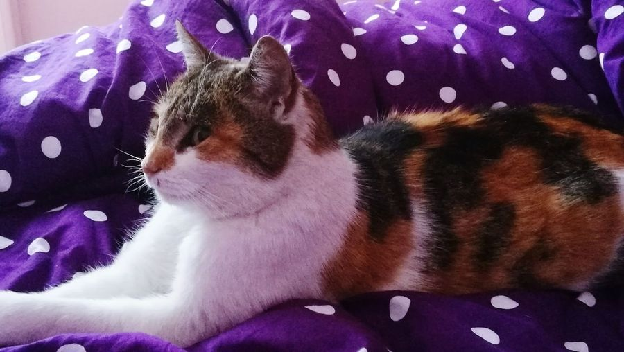 Sfinks :) Pets One Animal Mammal Domestic Cat Indoors
