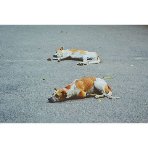 Life is better with a dog Location - Lal Bagh, Bangalore, India IndiaJourney Mansbestfriend
