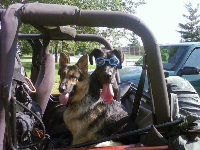 Dogslife Hi! Enjoying Life Crazy Animals  Amusing Great Dane German Shepherd Crazy Glasses Dogs