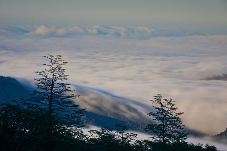 Tide of clouds... Idyllic Outdoors Snowcapped Mountain Coniferous Tree Day Mountain Non-urban Scene Nature Winter Cold Temperature Tranquil Scene Tranquility Cloud - Sky Scenics - Nature Plant Tree Beauty In Nature Sky No People Snow Environment Cloud Scenics Landscape