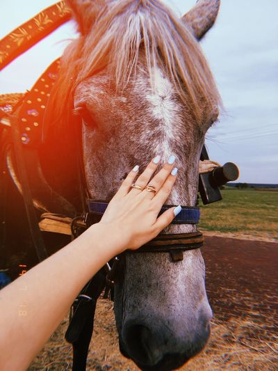 Cropped hand of woman touching horse