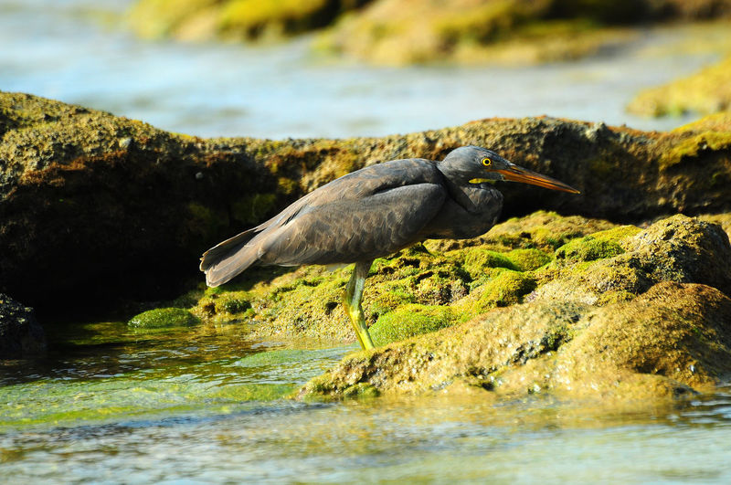 Side view of bird perching on rocky shore