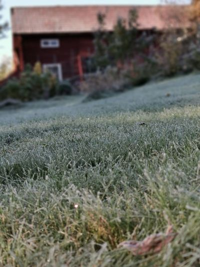 Frost Coold