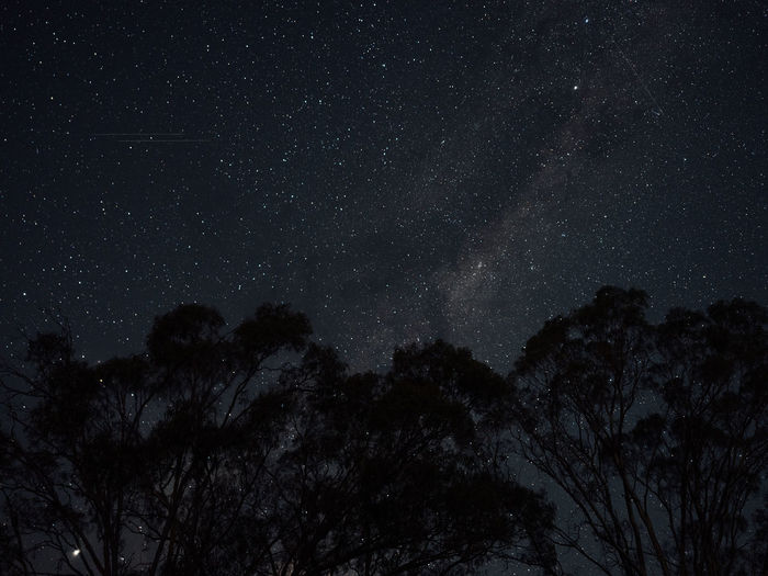 Sky Night Tree Star - Space Space Astronomy Low Angle View Plant Tranquility Scenics - Nature Beauty In Nature Star No People Tranquil Scene Nature Silhouette Star Field Infinity Galaxy Growth Milky Way