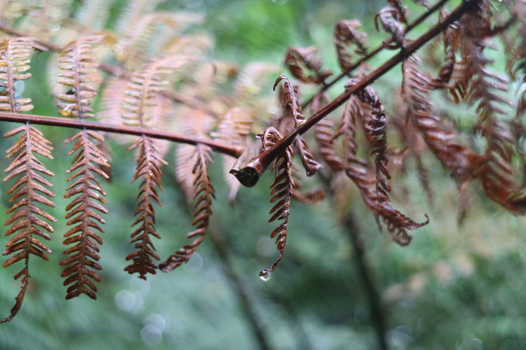 Dry Leaves Beauty In Nature Branch Close-up Droplet Forest Fragility Leaves Nature Nparks Nparksbuzz Outdoors Plant