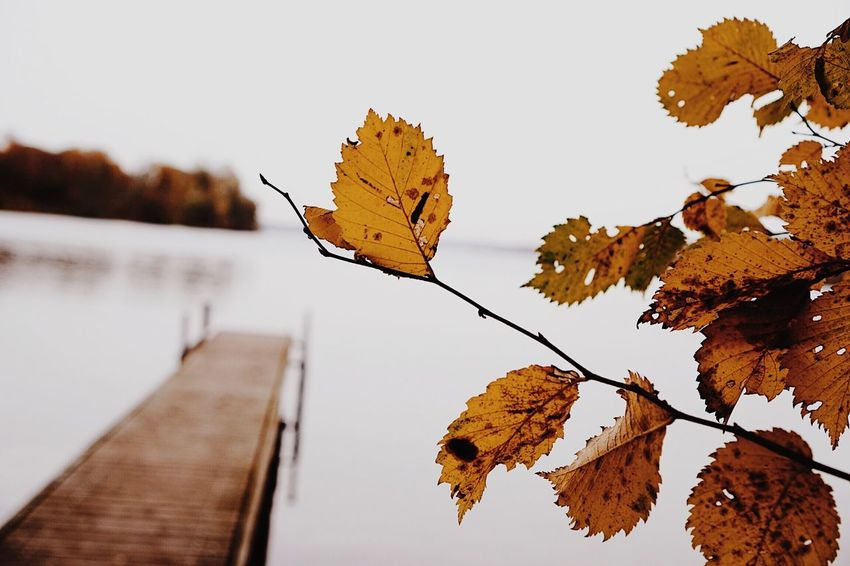 EyeEm Selects The Week On EyeEm Leaf Autumn Nature Change Reflection Water Outdoors Beauty In Nature Lake Day Branch Close-up No People Tree Scenics Sky Fragility Maple Autumn Colors Colorful Real Photography Colour Of Life Nature_collection