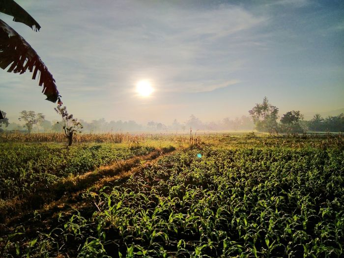 Feel the nature! Sky Morning Nature Agriculture Rural Scene Day Growth Cornfield Plant First Eyeem Photo EyeEmNewHere