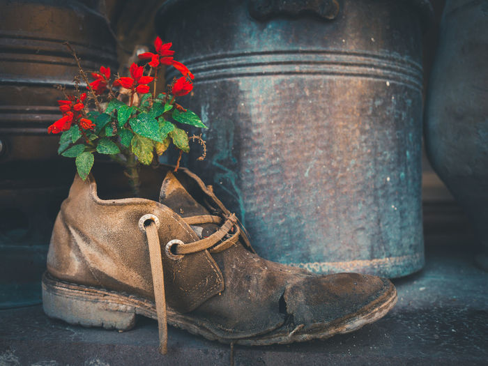 Beautiful creation in old leather shoes. - Nature Beautiful Flower Creativity Creation Red Green Leather Shoes Recycle Art Creative Old Vintage Damaged Growing Grow Hope Will EyeEm Best Shots EyeEm Gallery Exceptional Photographs EyeEm Masterclass