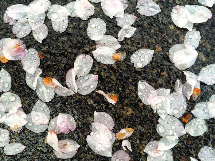 High Angle View Of Wet Fallen Flower Petals On Rock