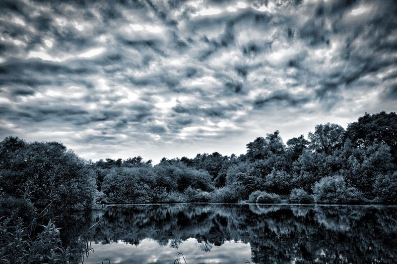 Beauty In Nature Cloud - Sky Day Forest Growth Lake Nature No People Outdoors Scenics Sky Tranquil Scene Tranquility Tree Water