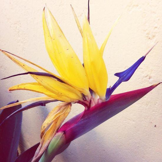 linda flor del ave