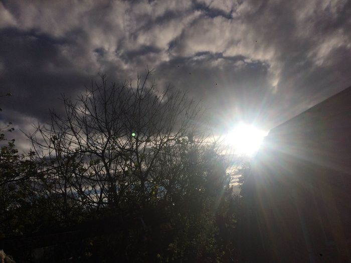Sun Sunbeam Lens Flare Sunlight