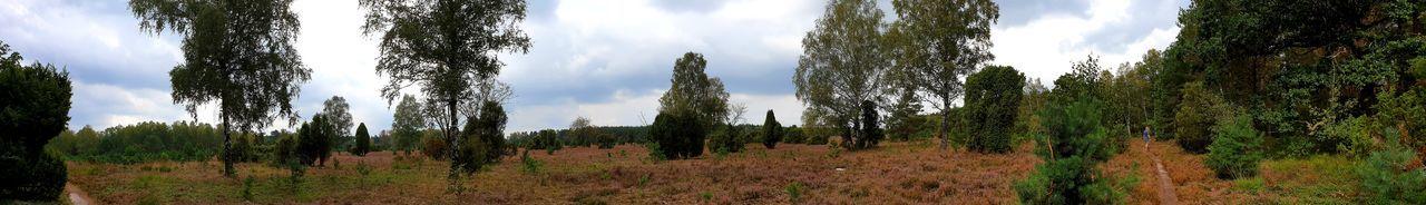 panoramic Foto