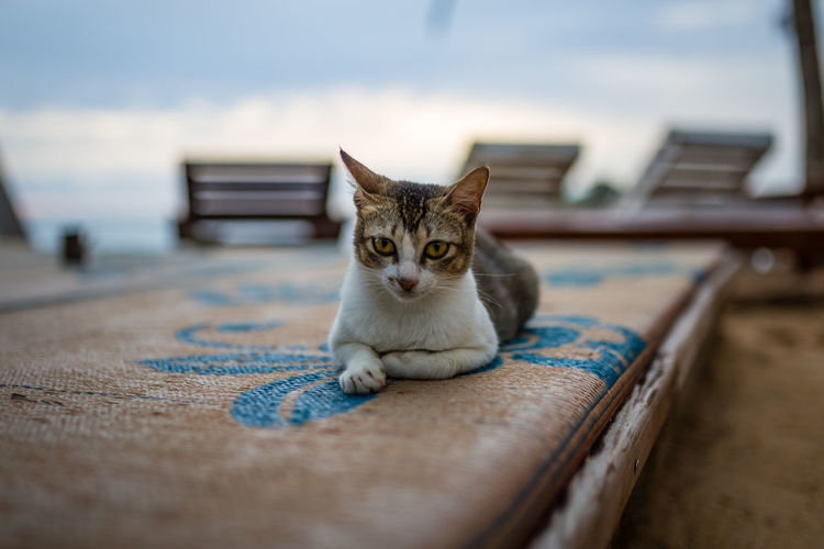 Portrait Of Cat Sitting On Mat
