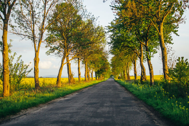 Empty road in Poland with trees on the side in spring Road Direction The Way Forward Nature Landscape Tranquil Scene Beauty In Nature Outdoors Lane Spring Poland Empty Road Countryside