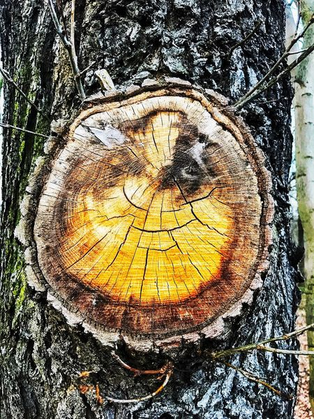 Beauty In Nature Close-up Day Deforestation Forest Forestry Industry Log Lumber Industry Nature No People Outdoors Textured  Timber Tree Tree Ring Tree Stump Tree Trunk Wood - Material