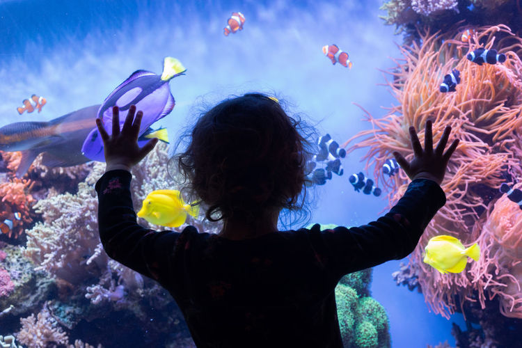 Animal Themes Animals In The Wild Underwater Sea Animal Wildlife Rear View Animal Sea Life One Person Vertebrate Marine Water Group Of Animals Fish UnderSea Aquarium Swimming Tank Waist Up Outdoors Childhood
