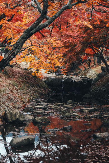 A day in Nara Park Tree Autumn Change Plant Water Nature Orange Color Beauty In Nature Branch Day No People Solid Rock Rock - Object Outdoors Growth Built Structure Architecture Tranquility Autumn Collection Flowing Water Cherry Blossom Red Red Color