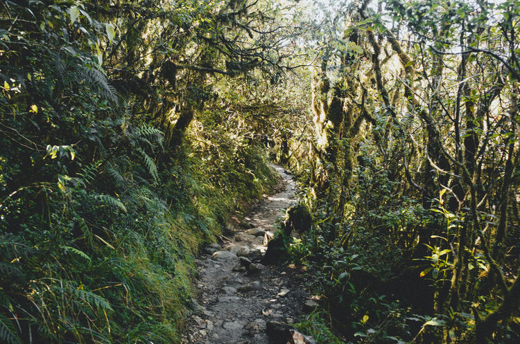 Adventure Ambangeg Beauty In Nature Benguet Eyeem Philippines Forest Growth Hiking Mossy Mossyforest Nature Nature No People Path Pathway Pulag Trail