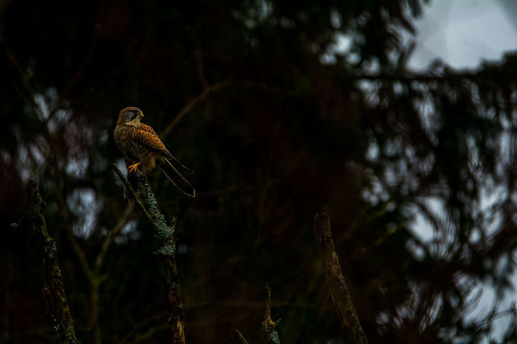 Animal Themes Animal Wildlife Animals In The Wild Bird Day Low Angle View Nature No People Outdoors Tree