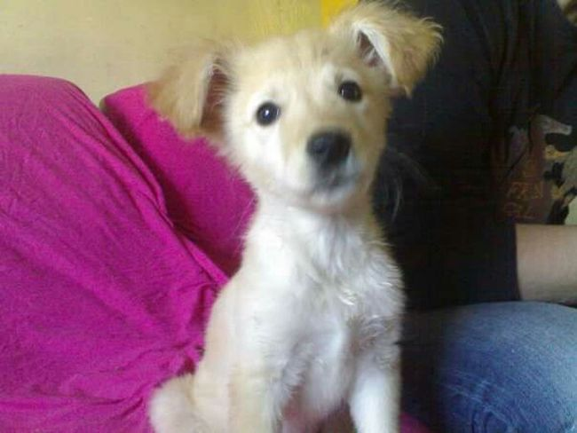 Sweet Dog Maylo Istanbul Turkey Bahcesehir Veterinary Time
