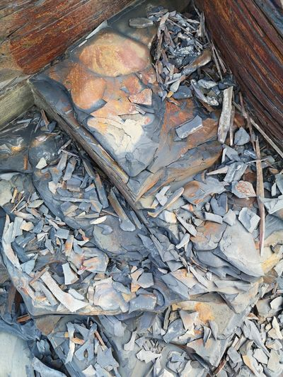 High angle view of dead fish on wood