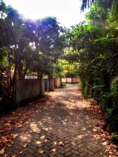Country Life Countrylife Nature Old Road Path Sri Lanka Tangallebeach Third World Country Vanishing Point Village Life First Eyeem Photo