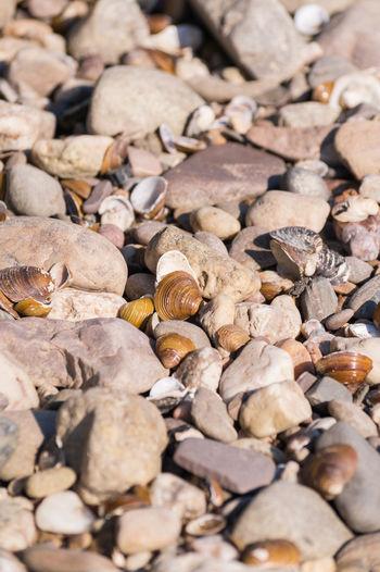 Full frame of seashells with rocks