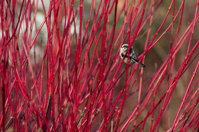 Low angle view of bird perching on red sticks
