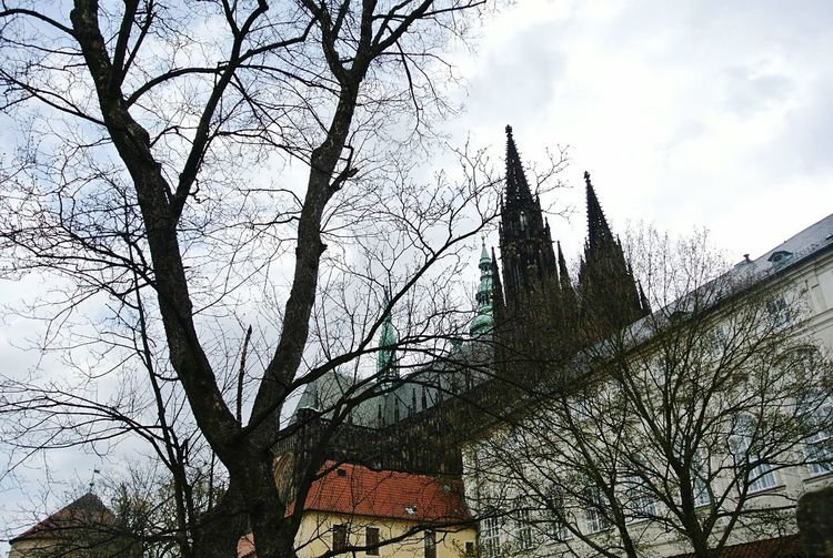 Prague Czech Republic Behind The Wall Offthebeatenpath Colours Of Nature Fairytale  Prague Castle Tree_collection  Trunk Tree Spring 2016 Castle My Best Photo 2016 The Great Outdoors - 2016 EyeEm Awards The Architect - 2016 EyeEm Awards Building And Sky The Great Outdoors - 2015 EyeEm Awards The Moment - 2016 Eyeem Awards The Architect- 2016 Eyeem Awards Europe Easterneurope Eastern Europe EyeEm Best Shots EyeEm Best Shots - Nature EyeEm Nature Lover EyeEm Best Shots - Landscape
