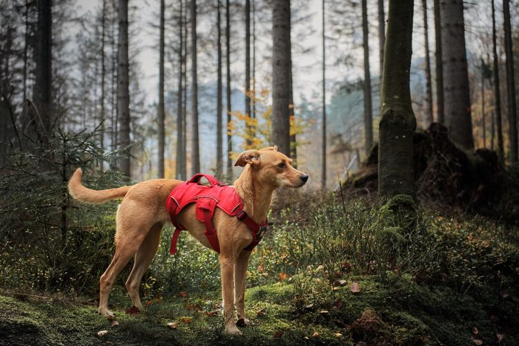 Dog looking away while standing on land