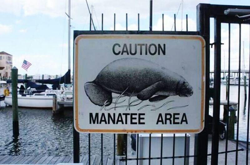 Manatee Area Caution Caution Sign Marina Be Careful Sea Cows Gentle Bradenton  Manatee County Florida Flag Flying
