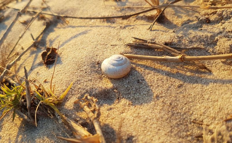 South Africa 🇿🇦 Sand Beach Day High Angle View Ball No People Outdoors Nature Close-up Animal Themes Seascape Photography Light Dispels Darkness Beauty In Creation  Capture The Moment Shells🐚 Exploring South Africa EyeEm Selects EyeEmInCapeTown
