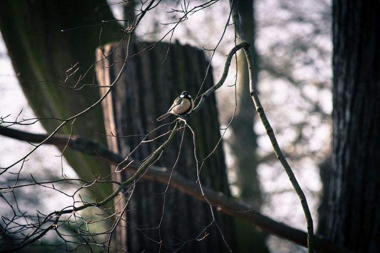 Bird Branch Close-up Focus On Foreground Nature No People Outdoors Safety Selective Focus Twig