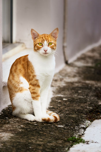 Animal Background Cat Eyes Feline Ginger Greece Kitten Looking Mammal Nature Orange Outdoor Outside Portrait Relax Serious Face Sitting Standing Street Walkway