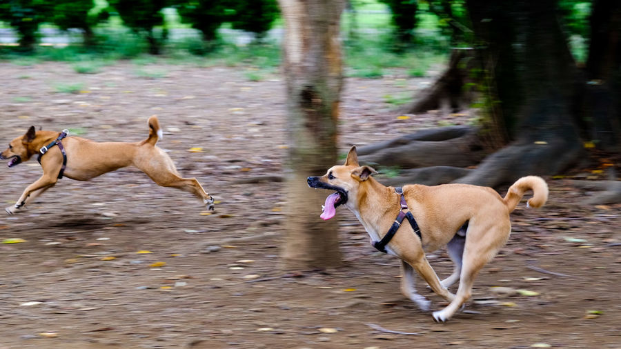 View of dogs running in water