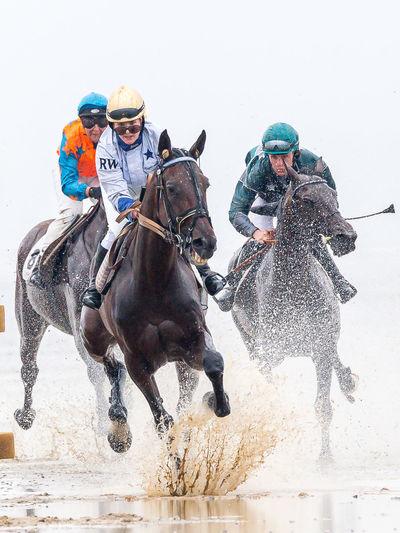 Animal Animal Themes Beach Fun Galope Race Horse Horseracing Sports Photography