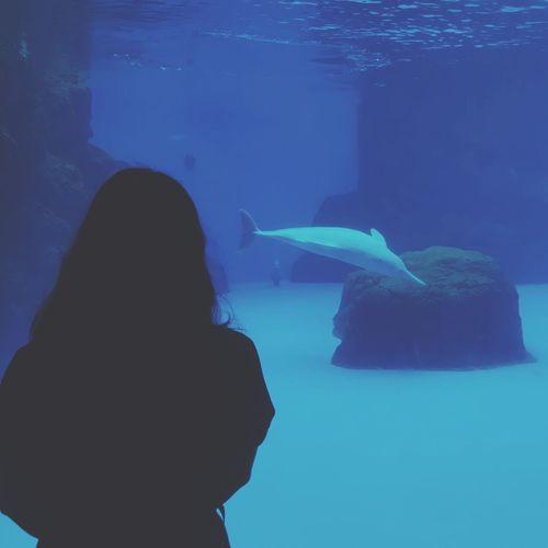 和你一起去看喜欢的白海豚,心里却想着,我们无法接收彼此发出的频率了,多糟糕。 WhiteDolphin Dolphin Water Sea Aquarium Tank Animals In The Wild Underwater Blue Sea Life Nature Fish Watching Women UnderSea Animal Wildlife Animals In Captivity Rear View