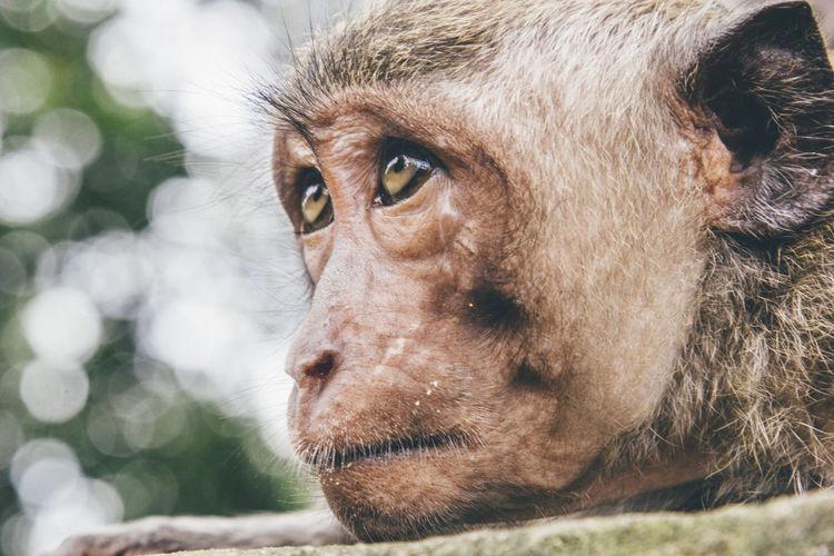 Close-Up Monkey On Field
