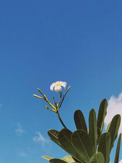 Blossom Plant