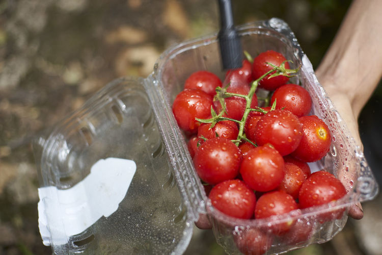 Cropped hand carrying wet tomatoes in container