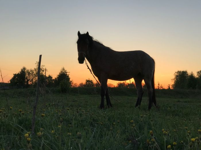 Mammal Animal Themes Sky Animal Domestic Animals Field Domestic Land Vertebrate Grass One Animal Animal Wildlife