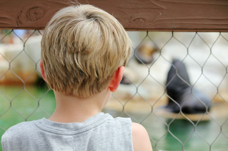 Rear View Of Boy Looking Through Fence