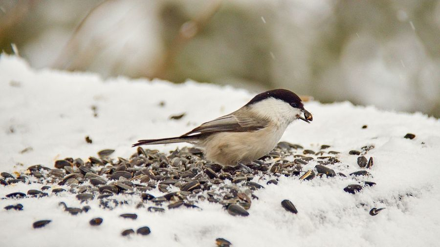 Close-up of a bird on snow covered landscape